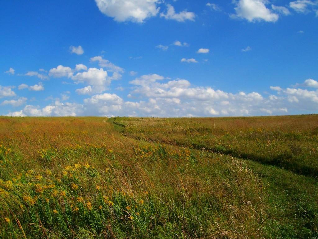 Grass Path Prairie