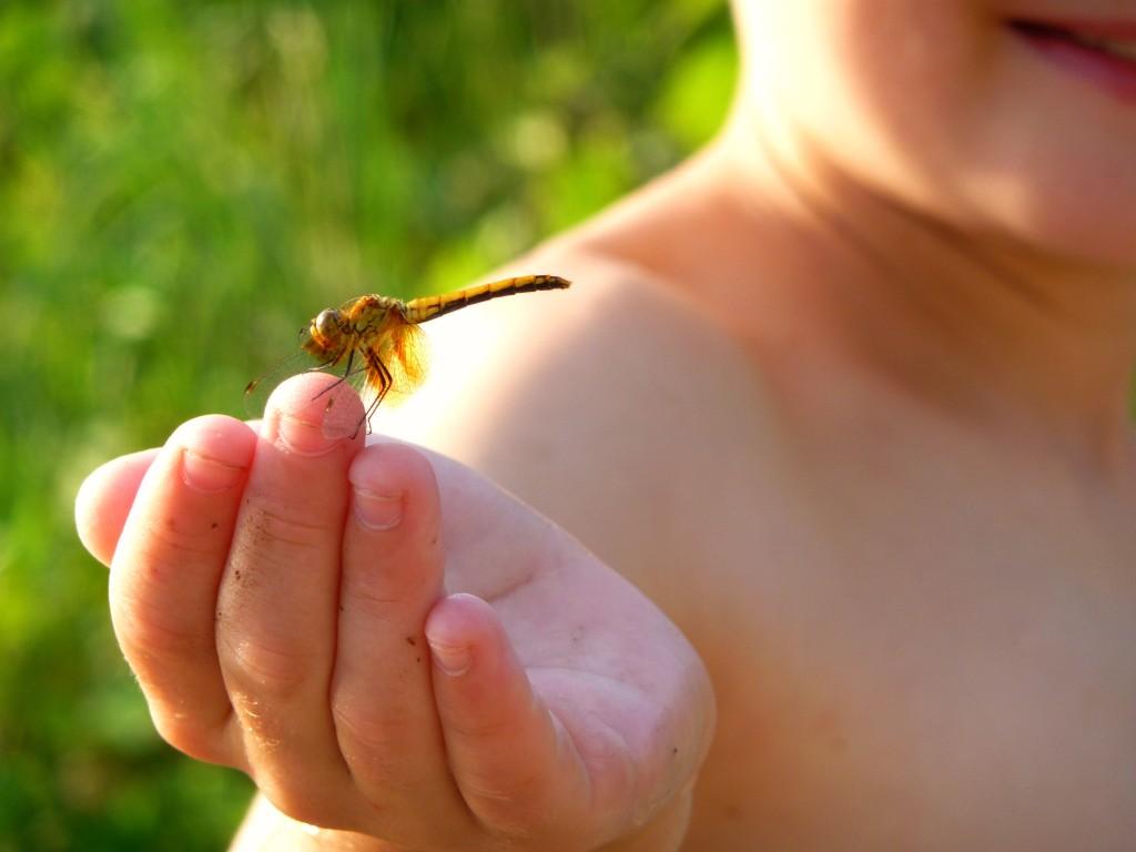 draonflyonfinger