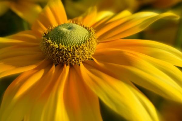 daisyfocus