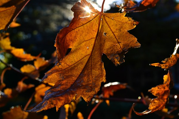 leafandsun