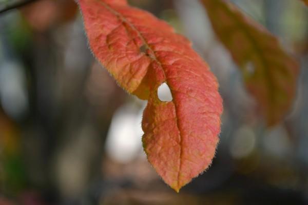 leafwithhole