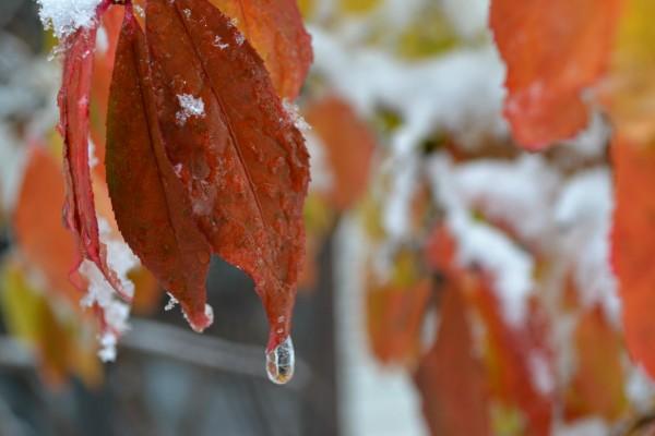 leaf and waterdroplet