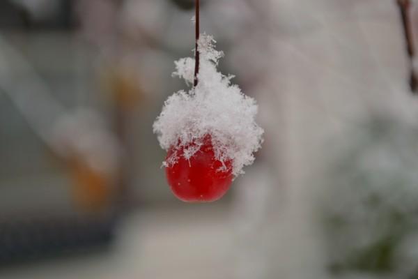 one snowy berry