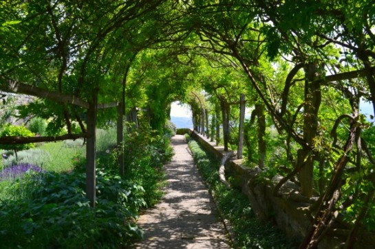 wisteria walk