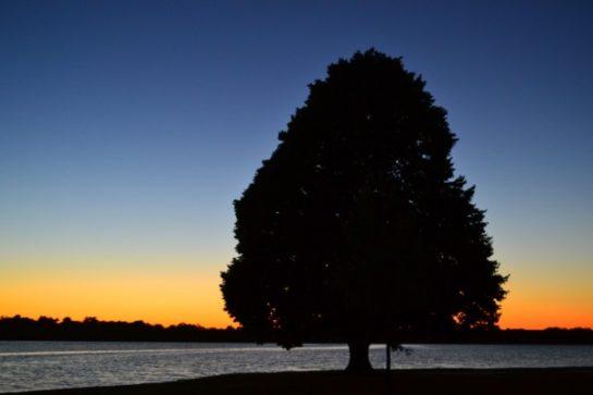 holmes-lake-tree